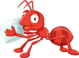 Discipleship Study - Wisdom - Proverbs 6:6-11 - Go To The Ant - Growing As Disciples