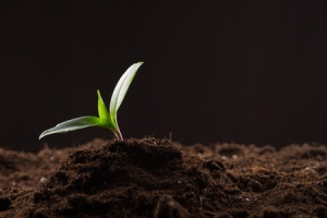 Discipleship Study - Parables - Matthew 13:3-9 - The Sower - Growing As Disciples